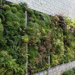 Особенности вертикального озеленения