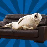 Новый диван, выполняющий все ваши требования