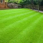 Посев газонной травы: что необходимо знать