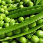 Критерии выбора зеленого горошка